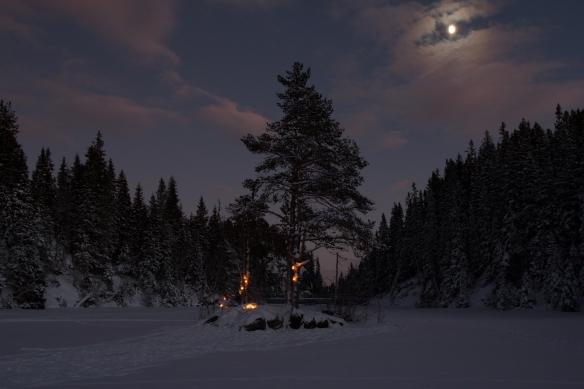 Lys i trær